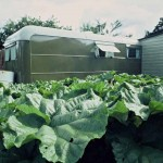 cabbages-with-caravan-in-ba-150x150.jpg